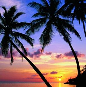 Palm-Trees-Florida