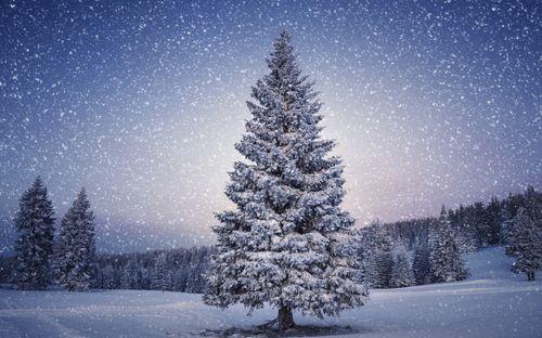 Around-the-Christmas-Tree